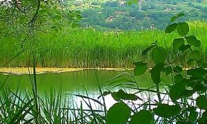 Lago vadimone